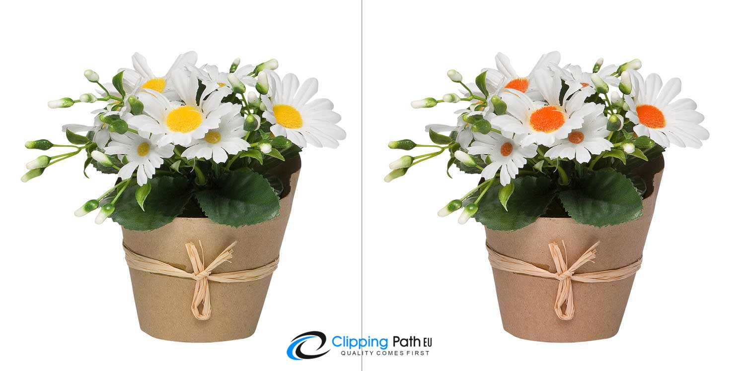 Color correction | Flower photo editing service