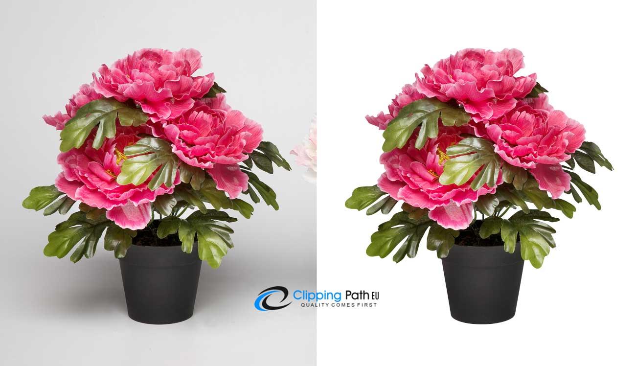 Transparent-photo   flower photo editing service